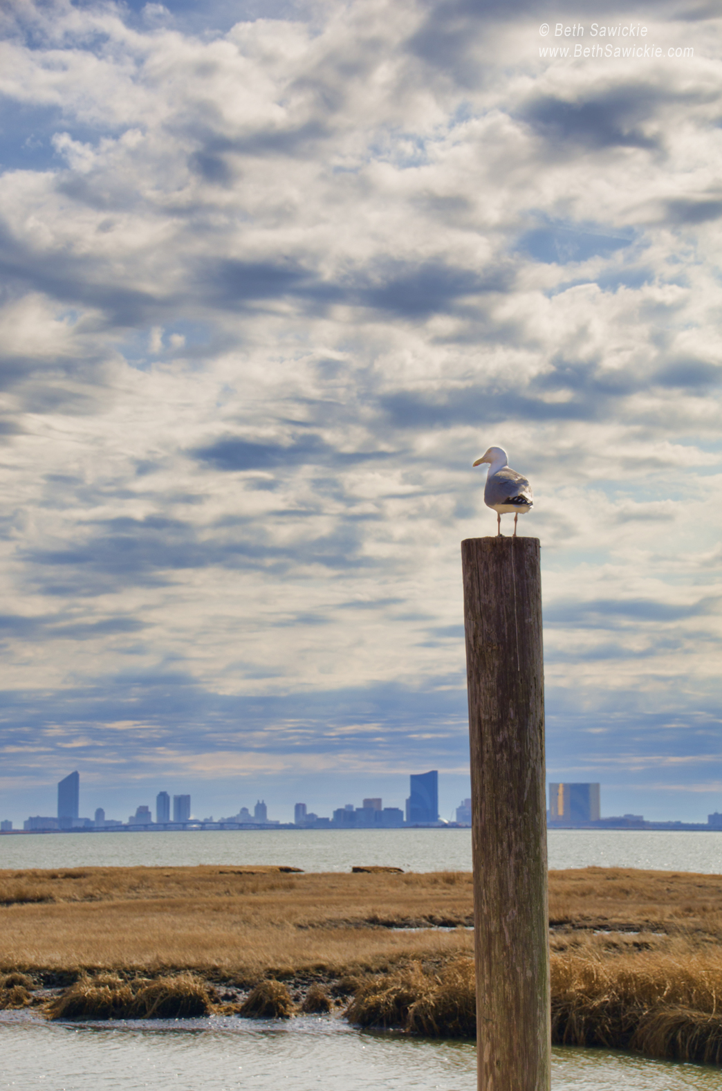 "Image by Beth Sawickie www.BethSawickie.com/seagull-overlooking-atlantic-city ""Seagull Overlooking Atlantic City, NJ"""