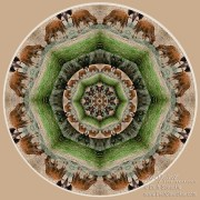 Baby Bison Mandala by Beth Sawickie http://bethsawickie.com/baby-bison-mandala