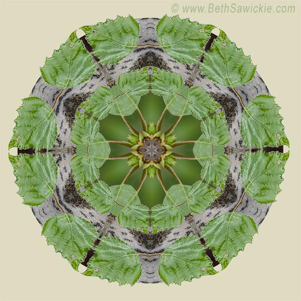 Birch Tree Mandala by Beth Sawickie http://www.bethsawickie.com/birch-tree-mandala