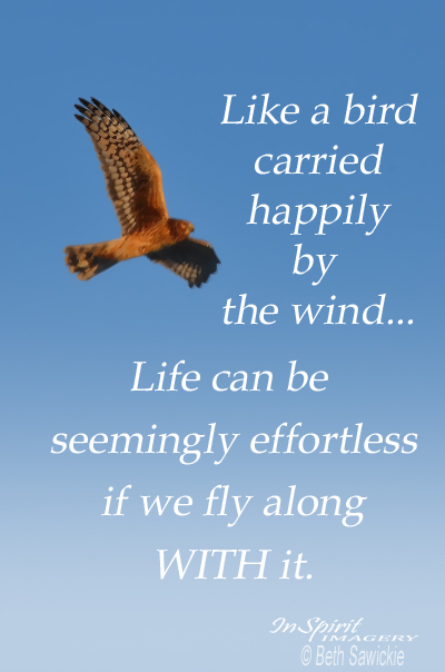 "Image by Beth Sawickie - www.BethSawickie.com ""Fly Along With Life"""