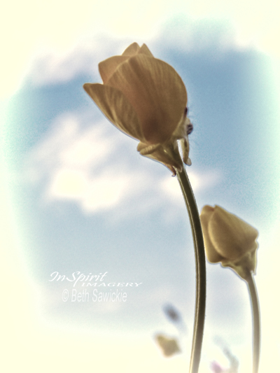 """Image by Beth Sawickie http://www.BethSawickie.com/buttercup-stretch  """"Buttercup Stretch"""""""