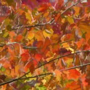 Fall Maple Colors by Beth Sawickie http://bethsawickie.com/fall-maple-colors