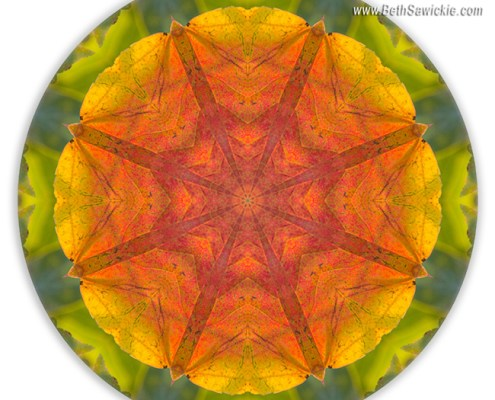 Maple Mandala 2 by Beth Sawickie http://www.BethSawickie.com/maple-mandala-2