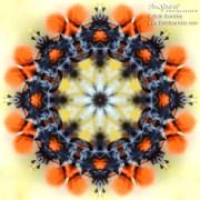 Moth Mandala by Beth Sawickie http://www.BethSawickie.com/moth-mandala