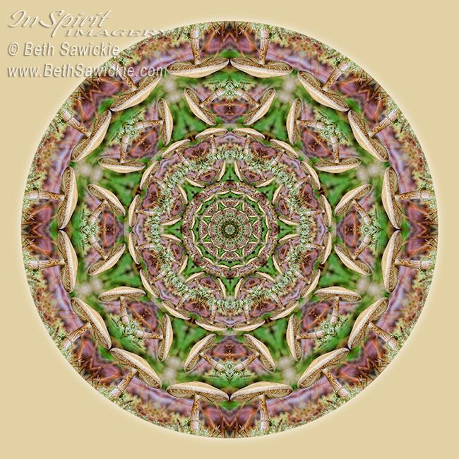 Mushroom Mandala 1 by Beth Sawickie http://www.bethsawickie.com/mushroom-mandala-1