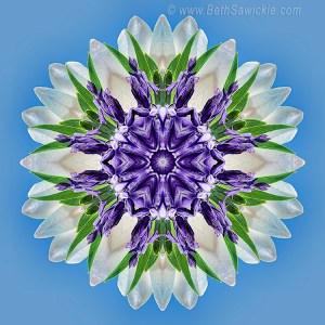 Purple Blooms Mandala by Beth Sawickie http://www.bethsawickie.com/purple-blooms-mandala