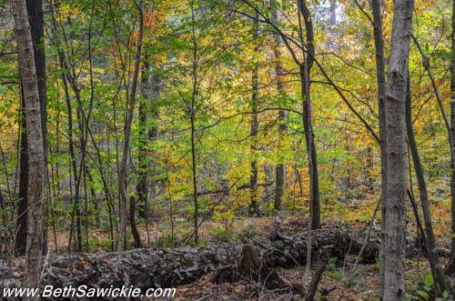 Lower Trail at Ricketts Glenn, PA