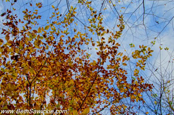 Looking Up at Ricketts Glen, PA