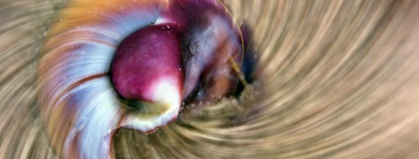 """Shell Vortex"" by Beth Sawickie www.BethSawickie.com/shell-vortex"