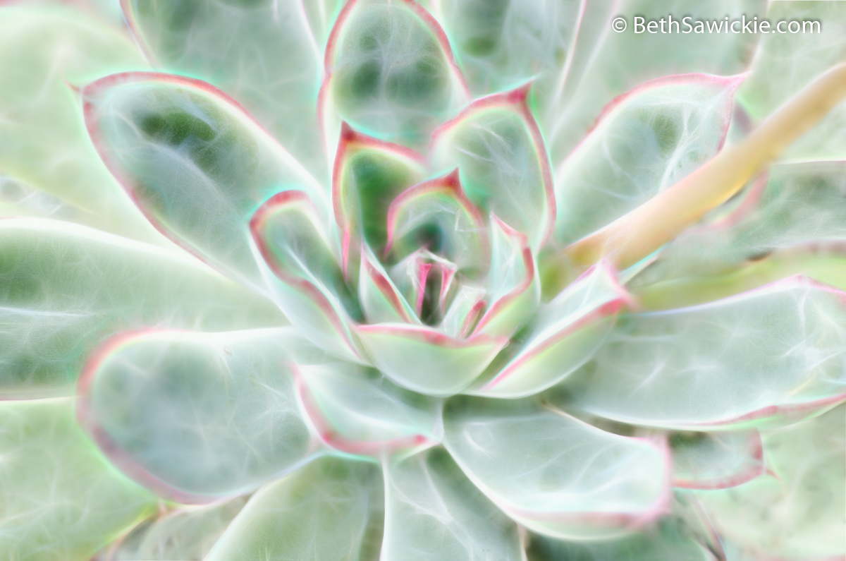 Green Pink Succulent Glow by Beth Sawickie
