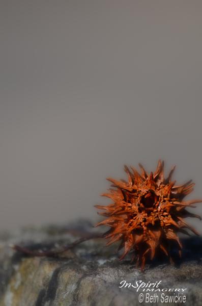 "Image by Beth Sawickie. ""Prickly Thing"" www.BethSawickie.com"