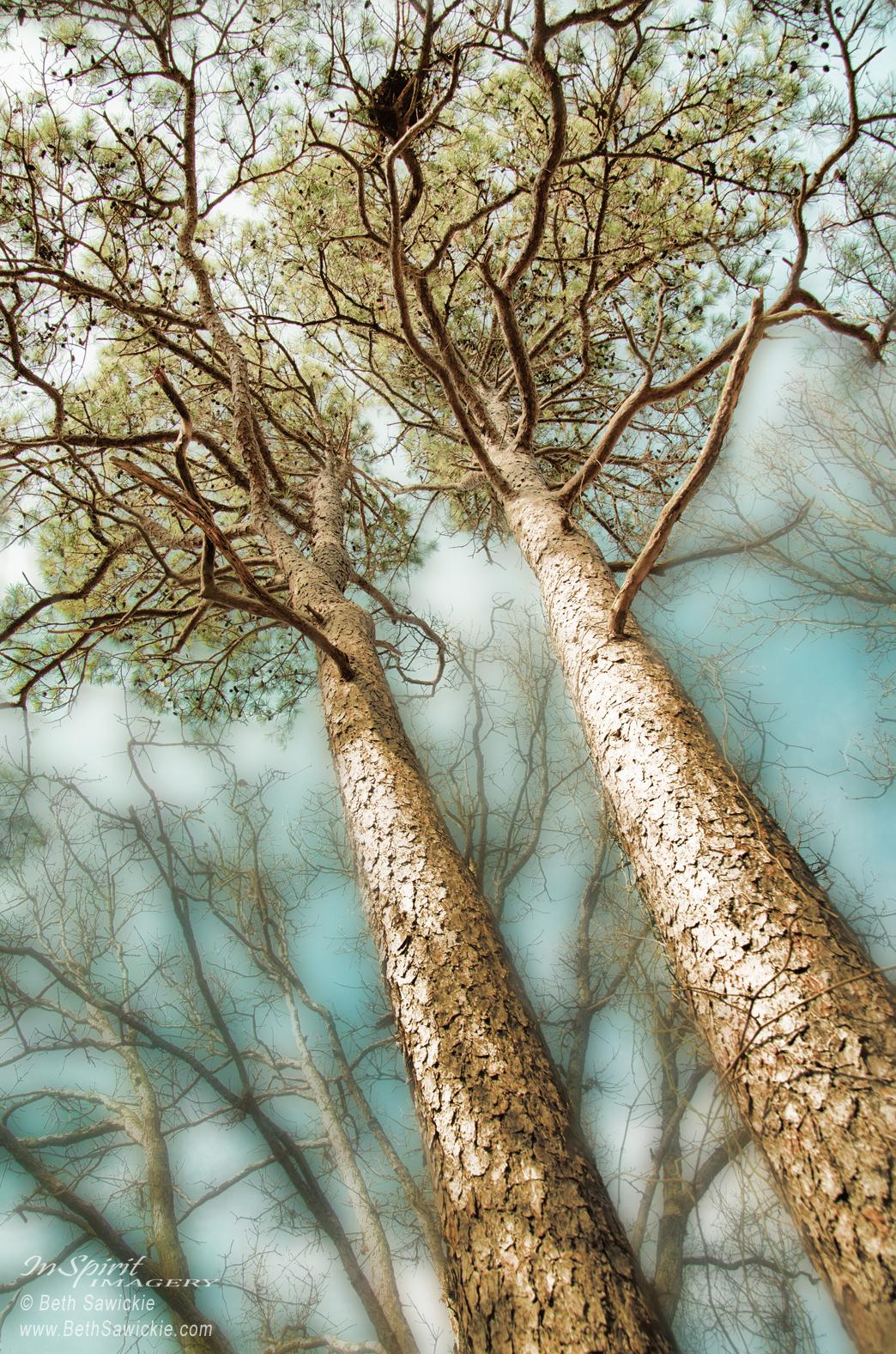 twin-pines-beth-sawickie-96dpiwm