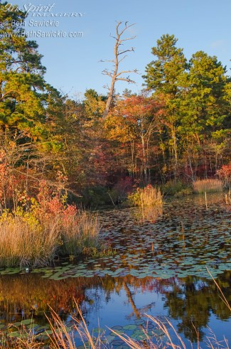 Fall Scene at Whitesbog Village by Beth Sawickie http://www.bethsawickie.com