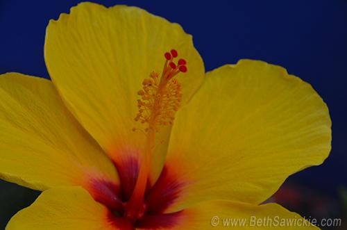Yellow Flower by Beth Sawickie http://www.BethSawickie.com