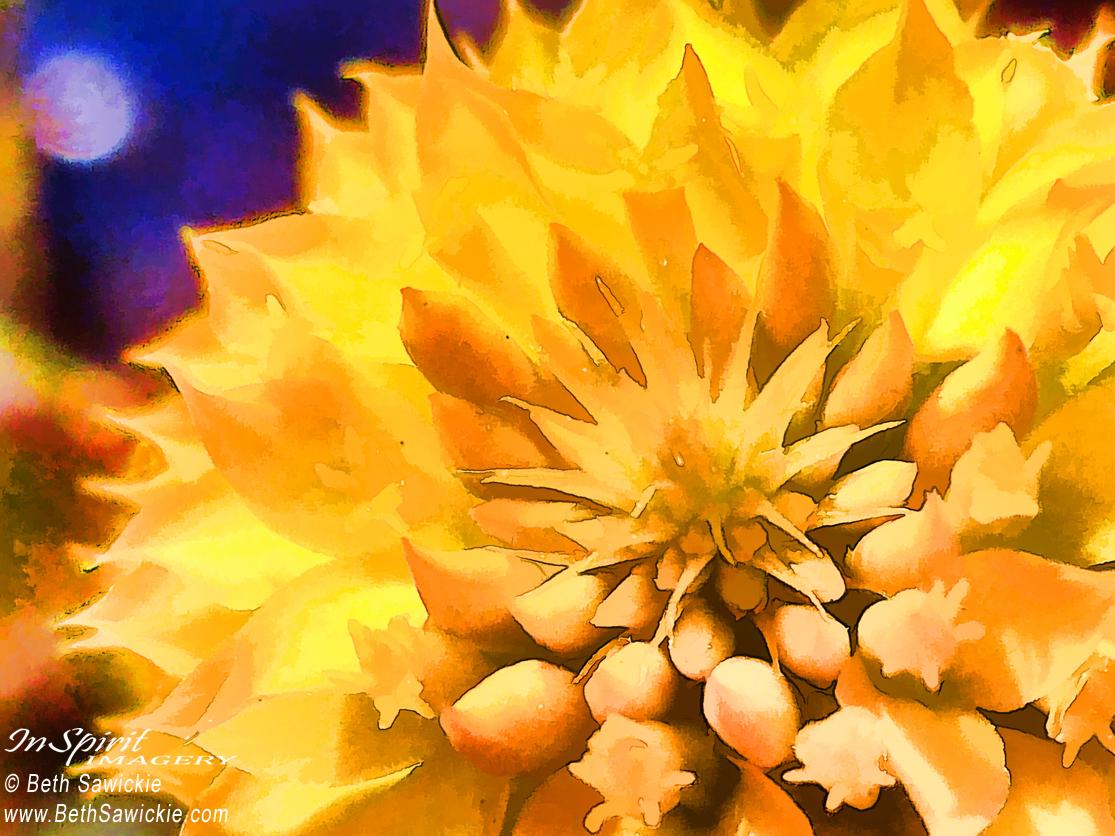 """Moonlit Yellow Flower"" by Beth Sawickie www.BethSawickie.com/moonlit-yellow-flower"