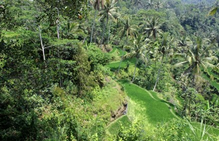 Beautiful panorama, Gunung Kawi, Bali