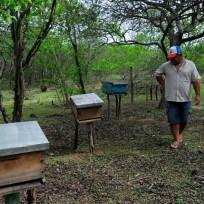 Nova Russas - Moradores convivem com período de seca na comunidade rural de Irapuá em Nova Russas. O apicultor Vicente Neto nas caixas de abelhas africanizadas (Fernando Frazão/Agência Brasil)