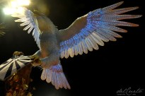 Portela 170227 029 Portela Abre alas Aguia no contra luz linda
