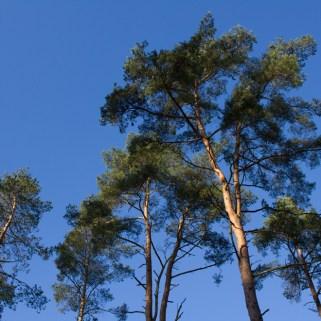 Die Palmen Brandenburgs