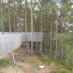 Sohlbergplatsen. Tallarna som förgrund till utsikten är en viktig del av upplevelsen. För att träd och mark skulle kunna bevaras byggdes betongkonstruktionen upphöjd på stålpelare. Bröstningen utgör bärande balk. Foto: Anita Stenler