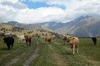 a walk between villages