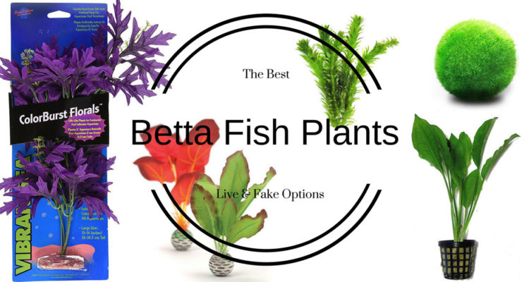 Best Plants Betta Fish