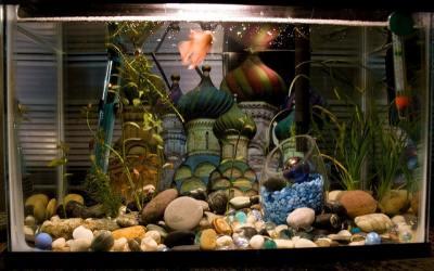 Betta Fish Tank
