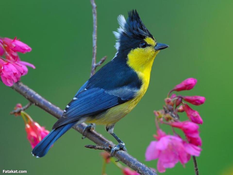 صور طيور جميله افضل كيف