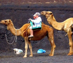 camel-ride-600x518