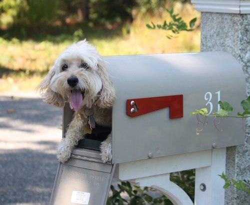smiling dog pic