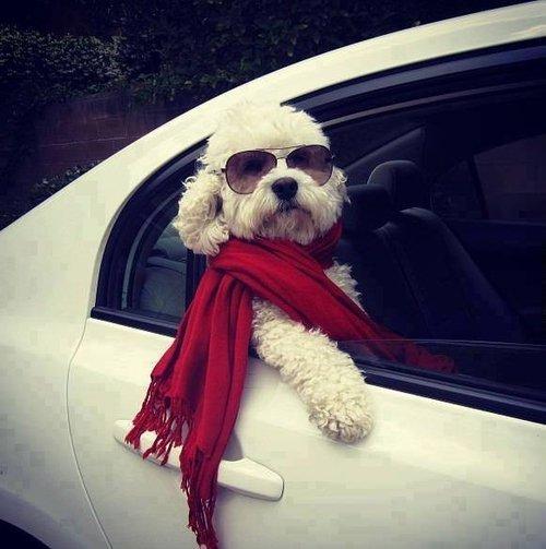 fashion-dog-2