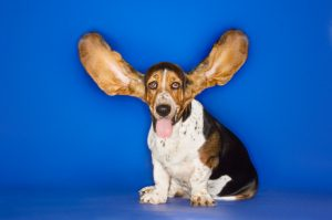 outstretched ears