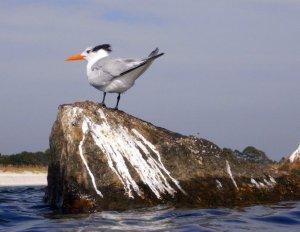 seagull shit