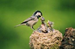 full nest no empty nest for us