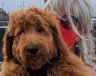 Hamilton the dog