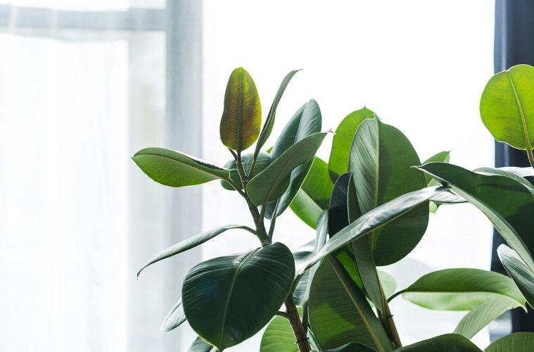 Closeup shot of a beautiful green house plant