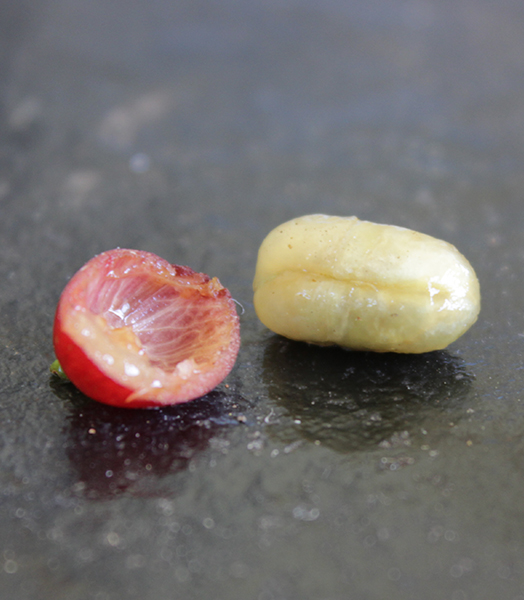 a coffee bean taken out of its skin. You can clearly see the pulp layer inside the skin and the shiny parchment surrounding the beans.