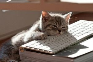 You're probably not nearly as cute as this kitten when you're waiting for your Board to act.