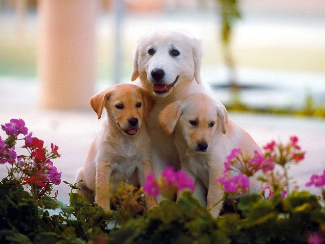 You see cute dogs.  I see flowers that will be murdered soon by these heartless urine machines.
