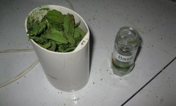 Drying Herbs Microwave