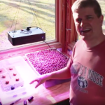 How to Build a Hydroponics Garden