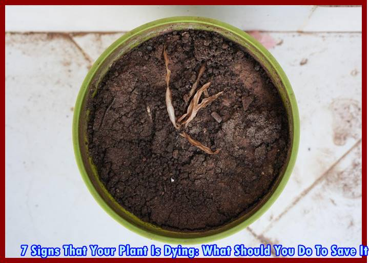 7 Signs That Your Plant Is Dying: What Should You Do To Save It