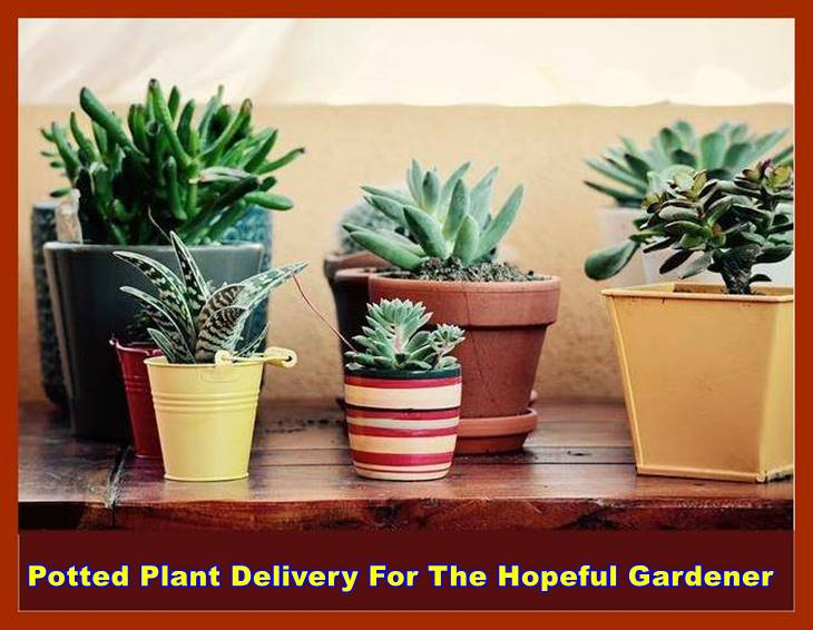 Potted Plant Delivery For The Hopeful Gardener
