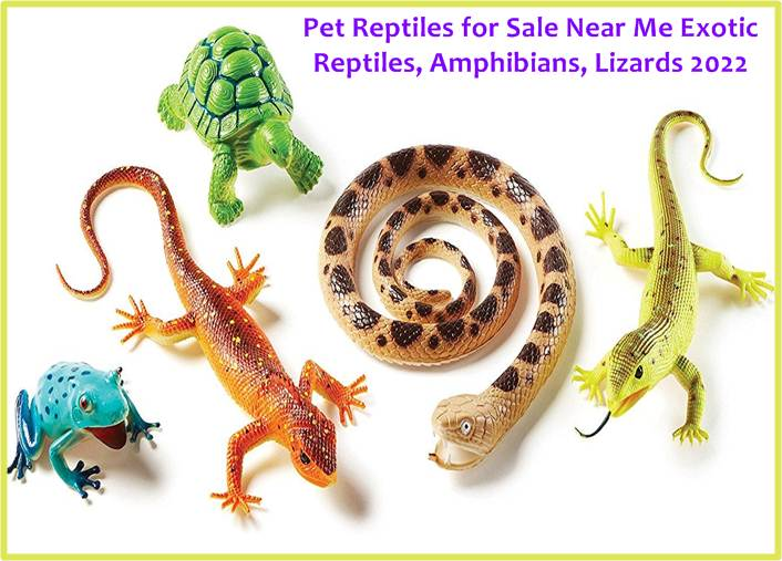 Reptiles for Sale Near Me