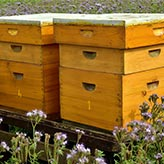 Bees at Better Place Farm