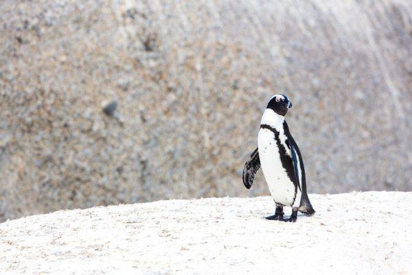 Googler Penguin 4.0