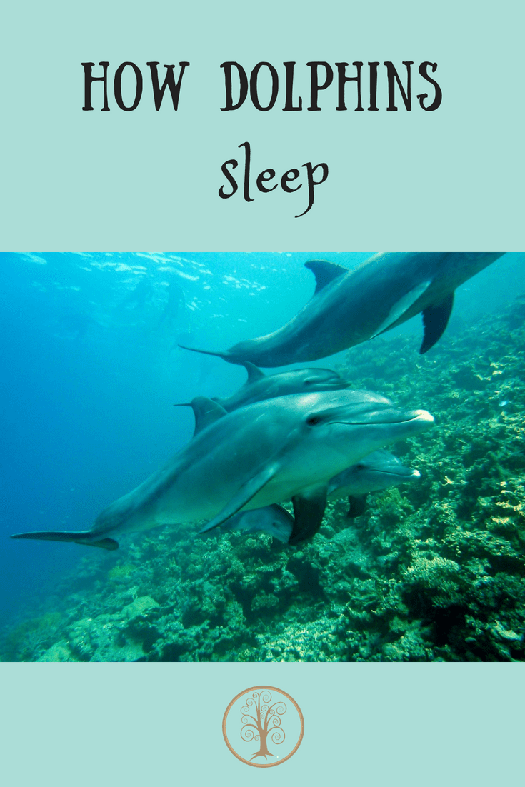 How dolphins sleep