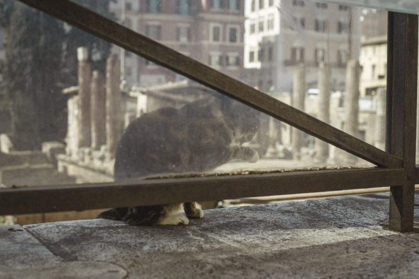 Largo di Torre Argentina Roman cat what to see trip guide