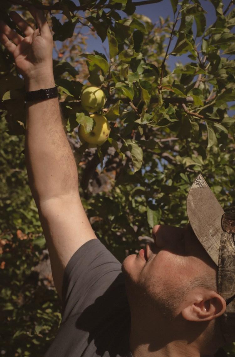 apple picking Julian