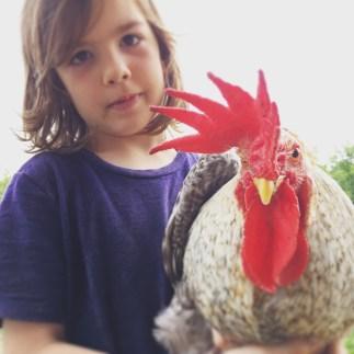 Cream Legbar Rooster